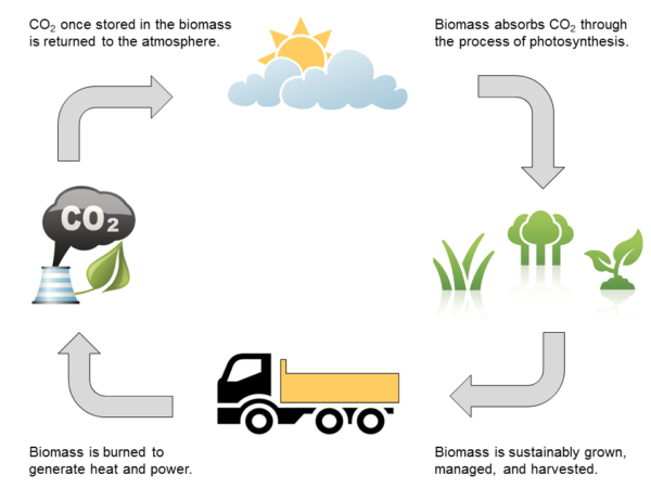 biomass cycle - photo #7