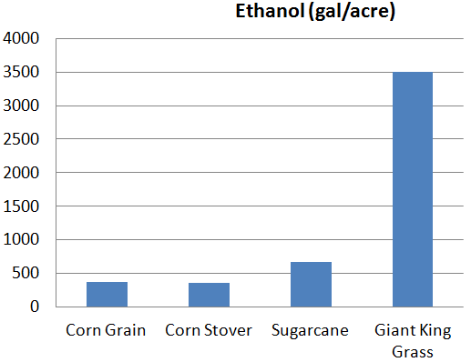 Ethanol in Giant King Grass