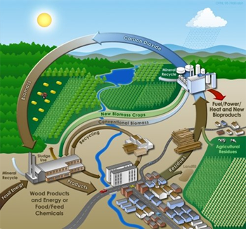 Viaspace : Biomass Versus Fossil Fuels, Solar and Wind