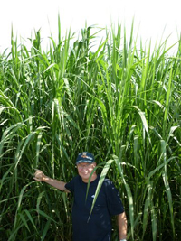 Giant King Grass at six months